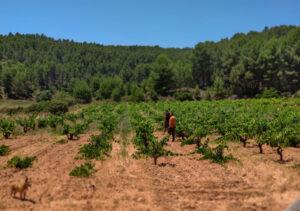 Bodegas Pigar, la alquimia ancestral valenciana